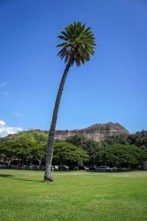 palmtreecurve.jpg