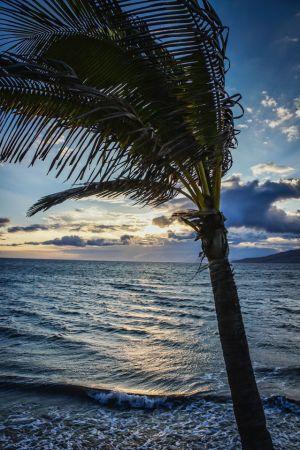 palmsinthewind.jpg