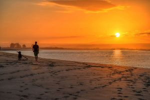 sunsetdog.jpg