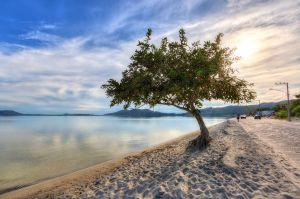 sunbathingtree.jpg