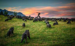 hillswolves2.jpg