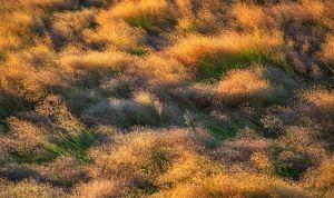 hillsgrass.jpg