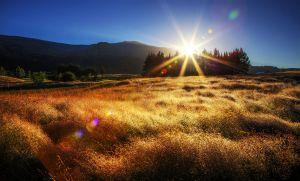 hillsgrasssunrise.jpg