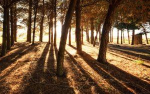 hillstrees.jpg