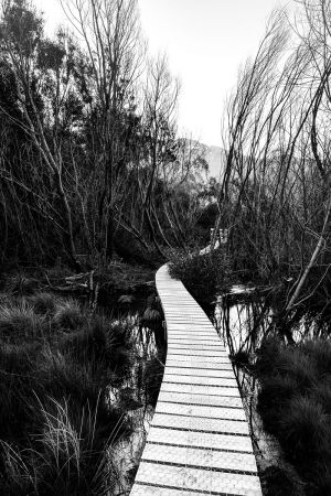 A Glenorchy Path