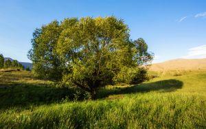 bendemeerlonelytree.jpg