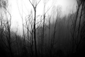 The fog.