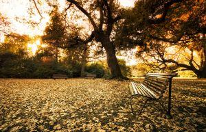 autumnbotanics.jpg
