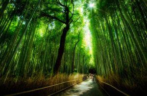 kyotobambooforest.jpg